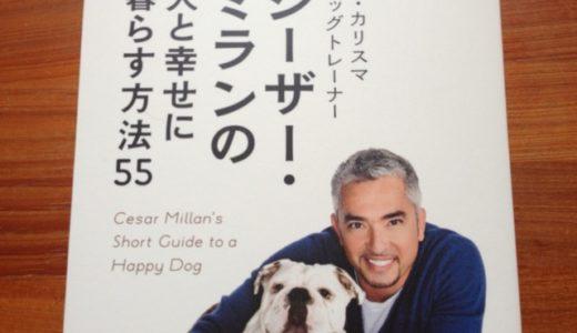 カリスマドッグトレーナーに学ぶ、犬と幸せに暮らすためのポイントと知っておくべき心得