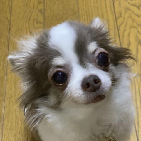 https://www.s-ichiryuu.com/wp-content/uploads/2019/12/IMG_7272.jpeg