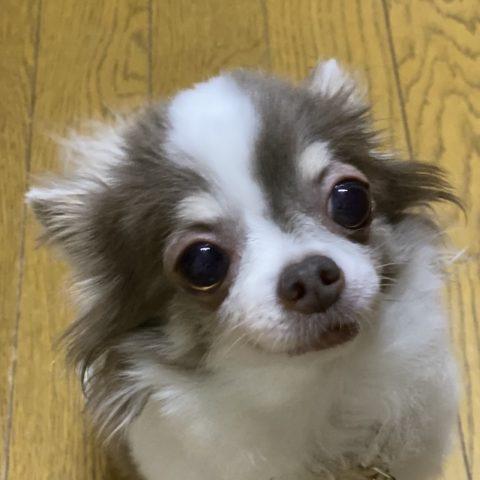 https://www.s-ichiryuu.com/wp-content/uploads/2020/02/IMG_7272.jpeg