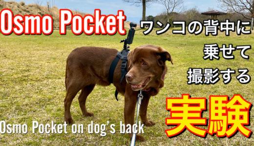 ドッグハーネスベルト【レビュー】Osmo Pocketをわんこの背中に乗せて撮影する実験